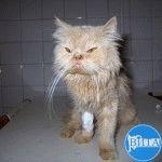 Поликистоз почек у кота: фото кота