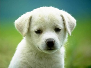 Puppy-3-dogs-1993798-1024-768