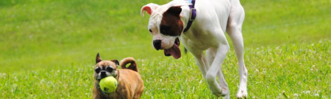 Отличие здоровой собаки от больной