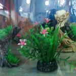 Растения для террариума