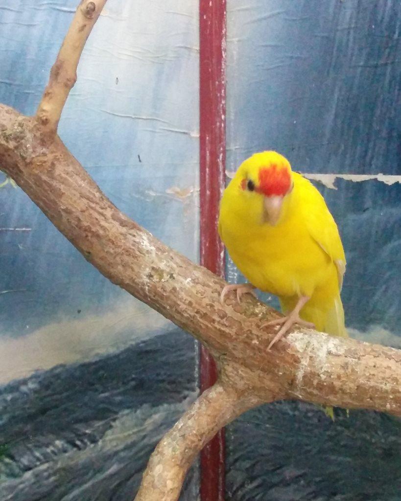 Какарик – прыгающий попугай
