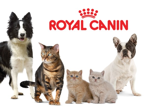 royal-canin3_091608